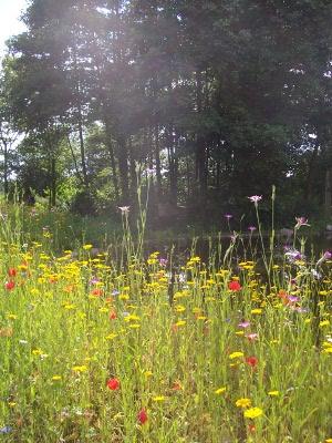 Blumen-mit-Teich